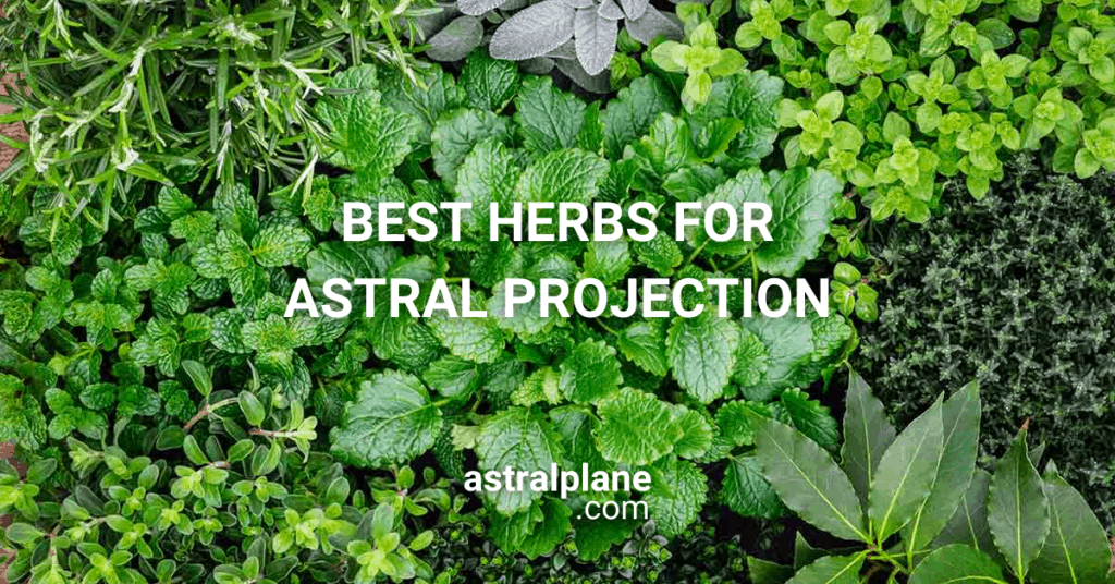 Best Herbs For Astral Projection